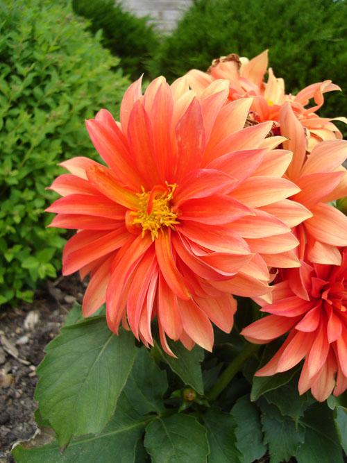 flower1 (115k image)