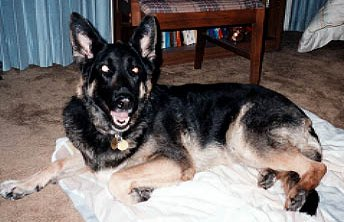 Ilsa shortly before the end; February 1998